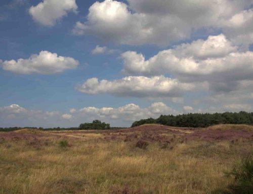 Natuurontwikkeling en archeologie